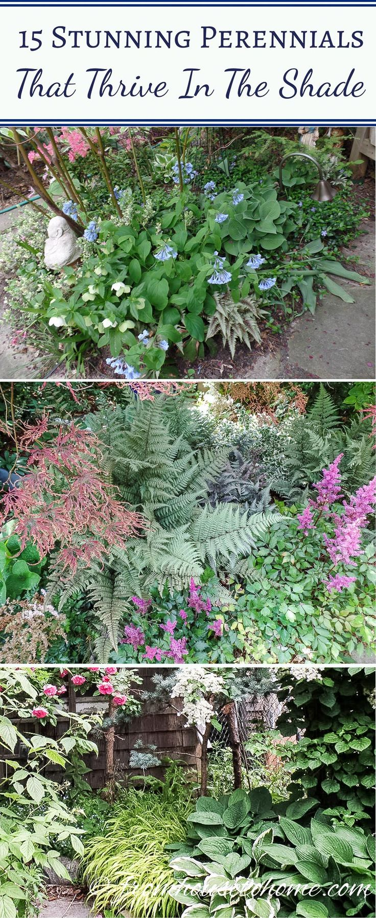How to plant ground cover for shady areas - 15 Stunning Perennials That Thrive In The Shade