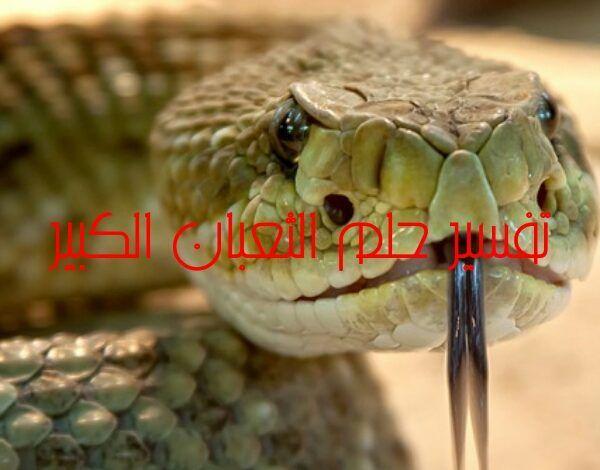 تفسير حلم الثعبان الكبير Snake Greatful