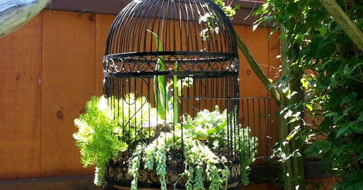 31 best Garden - Hanging succulents images on Pinterest ...