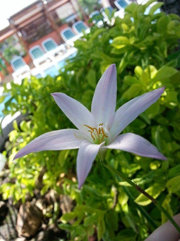 Panama has wonderful flowers and lush green