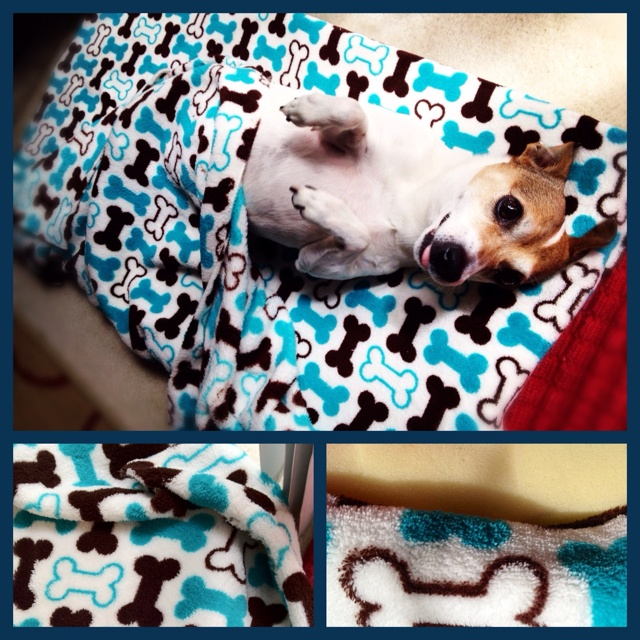 Homemade Dog Bed All You Need Is Memory Foam And A Soft Fabric Cut Foam To Size Sew Fabric