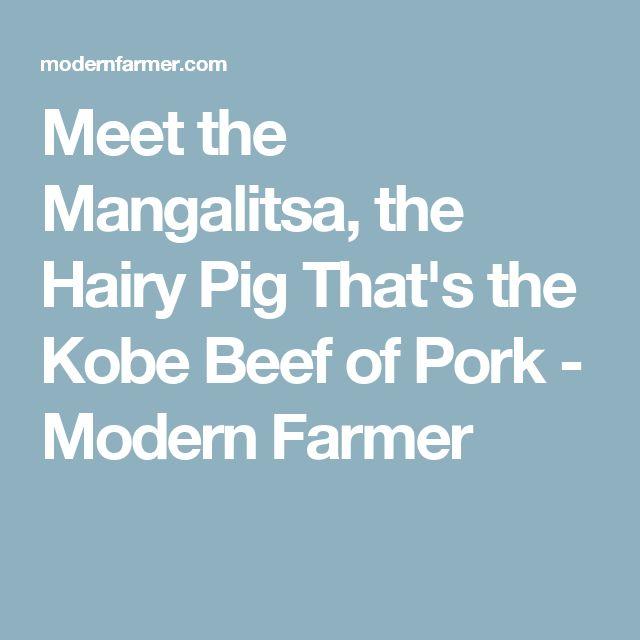 Meet the Mangalitsa, the Hairy Pig That's the Kobe Beef of Pork - Modern Farmer