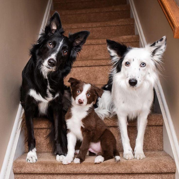 Les célèbres chiens câlins viennent d'accueillir un nouveau membre au sein de leur meute !
