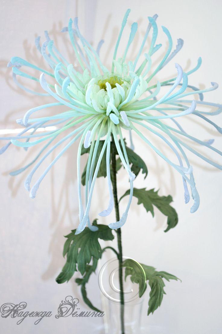 Лучевидная хризантема