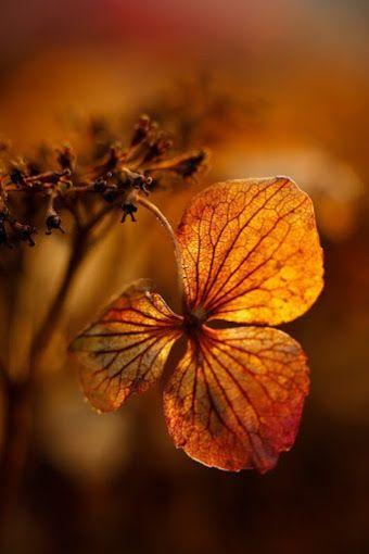 Pardonnez-moi ma belle nature… ! Pardonnez mes deux belles jumelles… Faune et flore… Pardonnez-moi mes rivières et mers… Pardonnez mes ruisseaux… Mes fleurs et fleurissons… Pardonnez-moi lumière et clarté du ciel… Pardonnez moi mes beaux… coucher et lever du soleil… Pardonnez-moi mes pétales et étamines… Pardonnez-moi mes roses et fleurs… Jasmins et tulipes… Pardonnez-moi graine de pollen… Excusez moi poussière très fine et toi anthère…