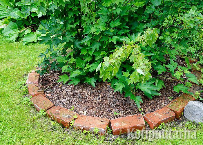 Vanhat tiilet sopivat puutarhan rajauksiin. Nurmikon leikkauksen kannalta olisi käytännöllisempää, jos tiilet olisi upotettu maahan.