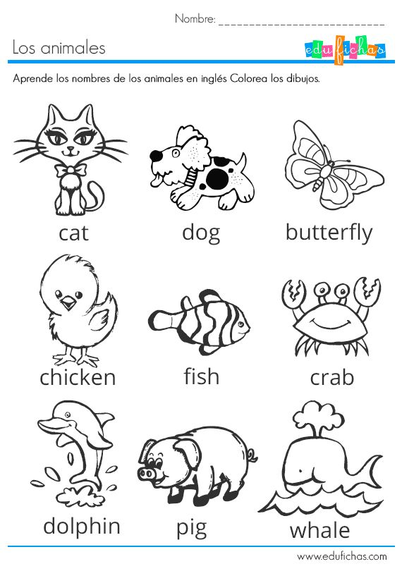 los animales en ingles