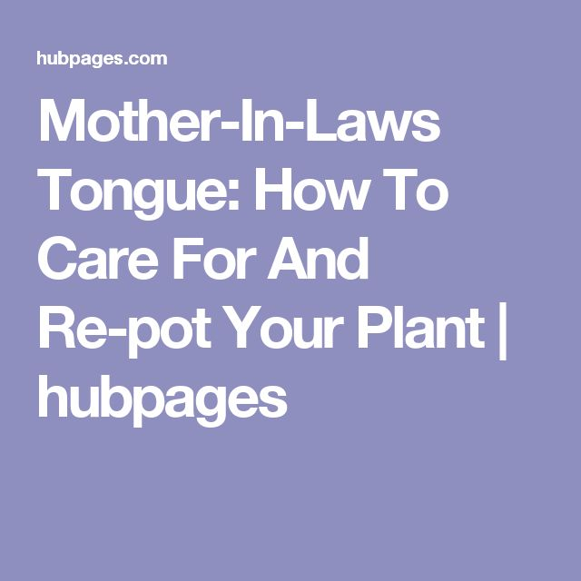 best 25 mother in law tongue ideas on pinterest sansevieria trifasciata snake plant and. Black Bedroom Furniture Sets. Home Design Ideas