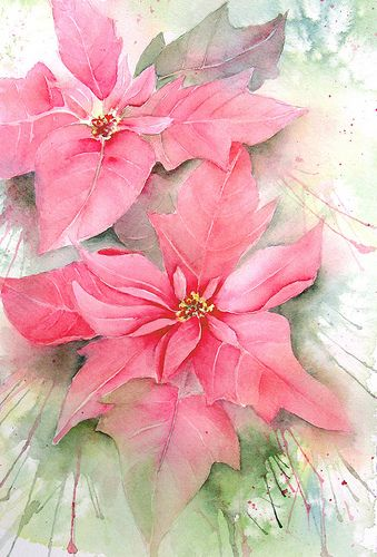 "Pink Poinsettias , a photo by linfrye on Flickr. 9"" x 12"" Arches 140#CP Poinsettias - the icon of the holidays! The greenhouse program at ..."
