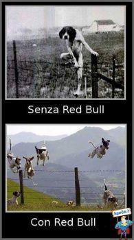 foto animali divertenti 764