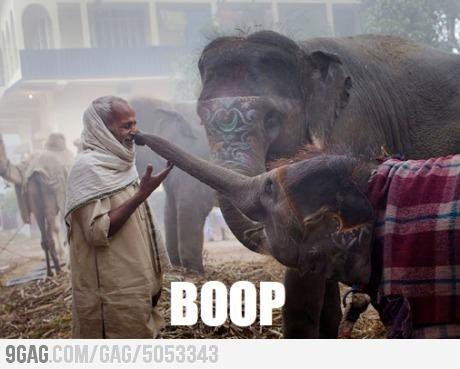 BOOP!: Kiss, Except, Baby Elephants, Beautiful Moments, Baby Animal, India, Elephants Love, People, Photo