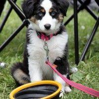 #dogalize Articoli per cani: indispensabili per la sua vita #dogs #cats #pets