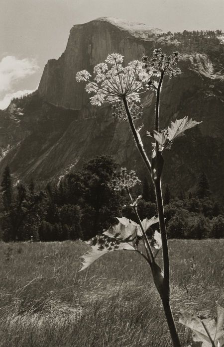 Untitled (Flowering Plant with Mountain Range), 1930s. @darlene Bankston #Naturalbeauty