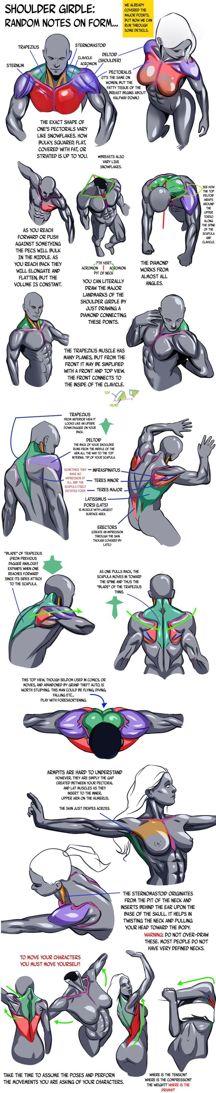 How to draw the shoulder girdle, courtesy of N3M0S1S.deviantart.com. I'm not keen on how shiny each of the forms are in this tutorial, but the notes are amazing.: