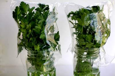 How to store your fresh herbs for weeks in the fridge! This works really well to extend the life of your herbs! source: simplyrecipes.com
