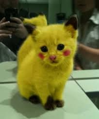 picachu is real?????????????????????                                                                                                                                                                                 Más