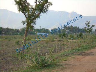 Kodai Hills Real Estate.: Cheap Rate 23 Acre Agricultural Land For Sale
