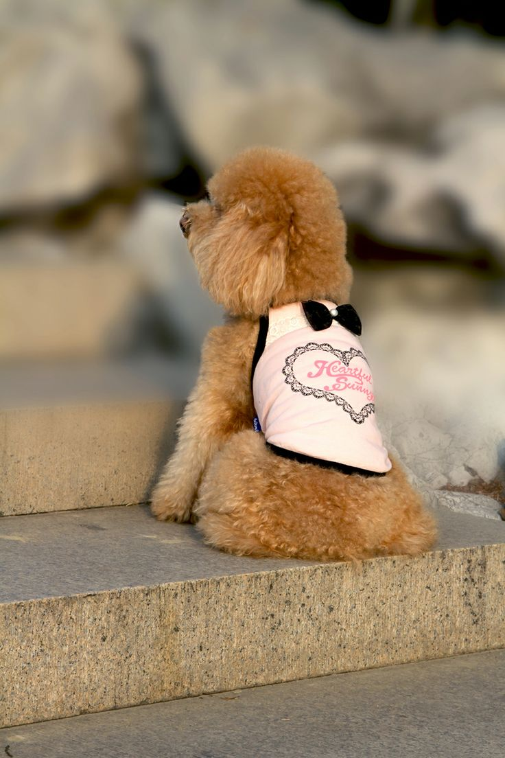 Sweetheart Sun-Top in Pink! Nice and Simple :) http://edenpetz.co.uk/dogs/dogclothing/summerdresses/prettysleevelesstshirtmedium