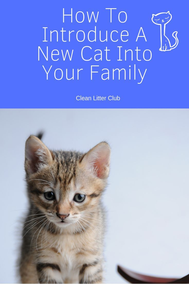 How To Introduce A New Cat To Your Family Introducing A New Cat Cats Cat Care
