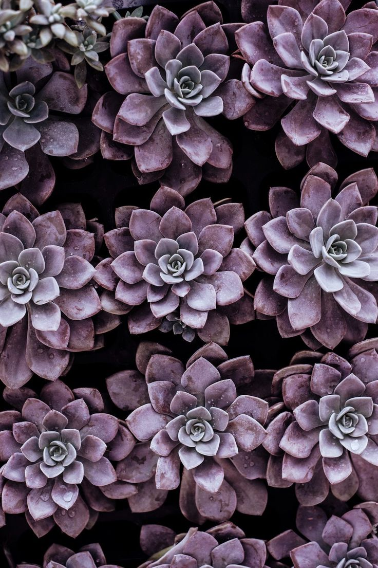 flores, plantas, moradas, jardín, geometría, 1711161638