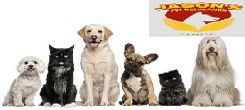 Everyone cannot identify with your love for pet. Moving to a dissimilar country along with your much-loved pet could be complicated for you but not for pet movers. Specialize in #ImportingPetsIntoSingapore . http://www.petrelocationsg.com/pet-import