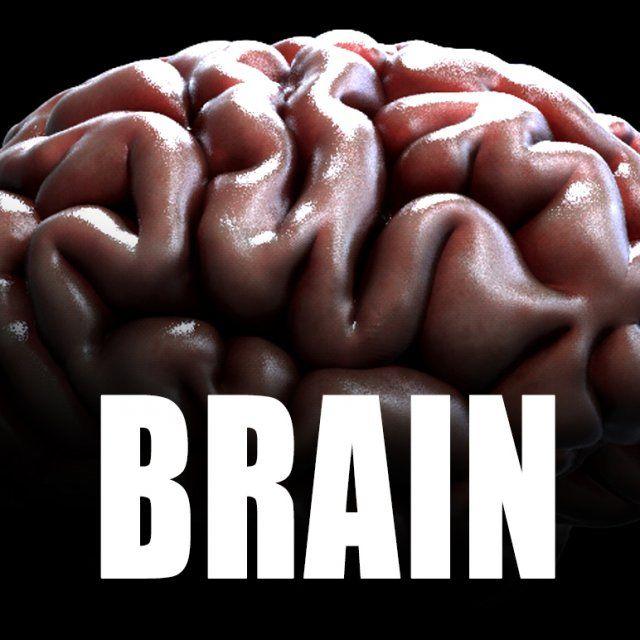 3d Human brain model 3D Model .max .c4d .obj .3ds .fbx .lwo .stl @3DExport.com by leandroacosta
