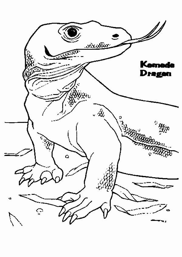 Coloring Pages : 42 Komodo Dragon Coloring Page Image