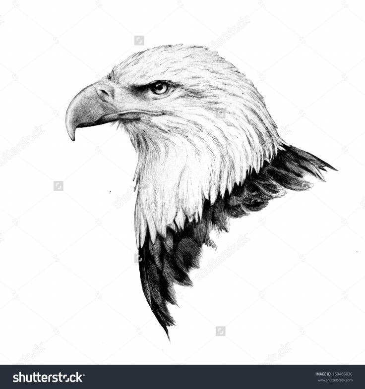 eagle head drawing