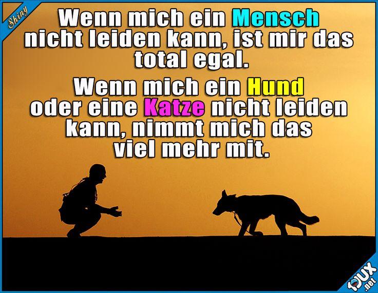 Kommt hoffentlich nie vor ^^  #Sprüche #Weisheiten #Weisheit #sowahr #Hund #Hunde #Katze #Katzen #Jodel #1jux #SpruchdesTages #BilddesTages