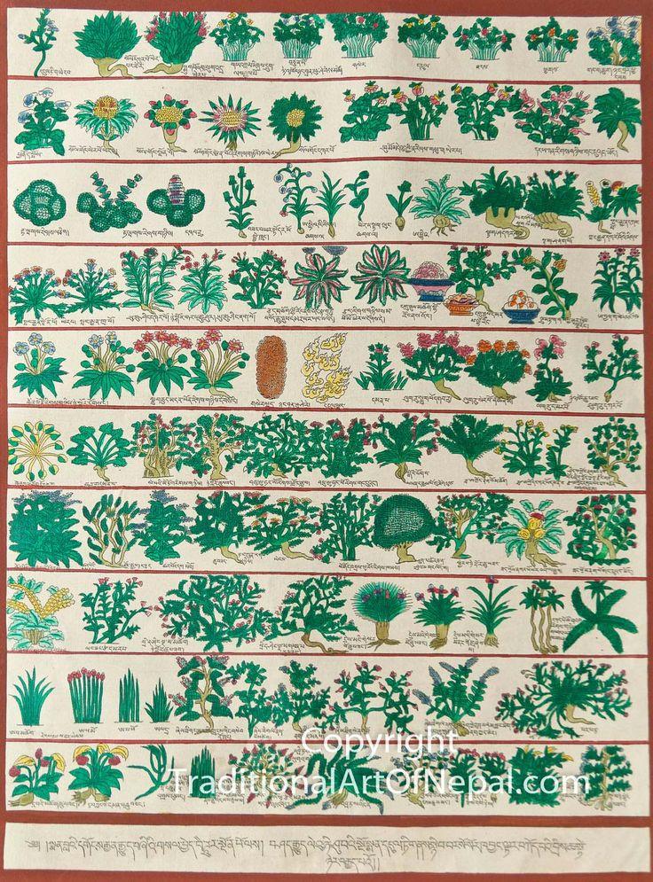 Tibetan Medical Herbs Thangka Painting  traditionalartofnepal.com