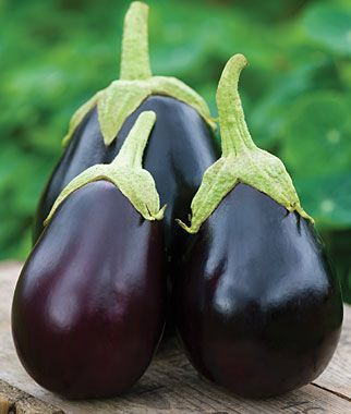 Eggplant Early Midnight Hybrid From Burpee Want To Grow 400 x 300