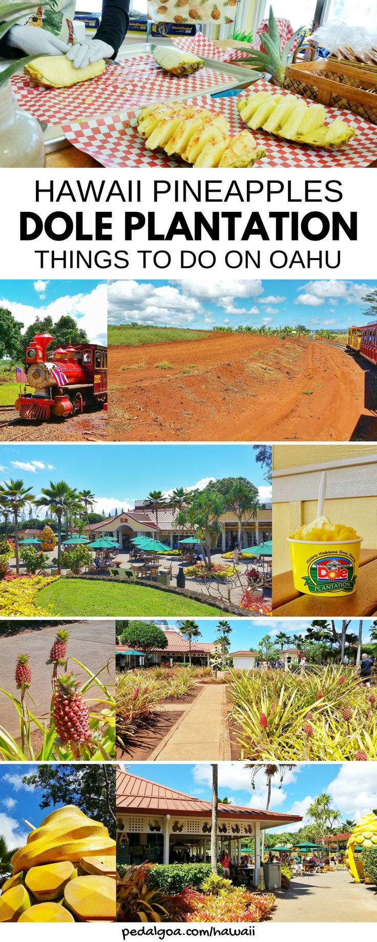 Dole pineapple plantation in Hawaii is top tourist attraction in Oahu! Fun things to do for free when in Hawaii on a budget, with kids for family travel. Eat famous dole pineapple whip ice cream at restaurant and shopping for souvenirs at gift shop. There's also maze, tours of gardens, trains, with Hawaiian culture. Trip to dole pineapple plantation on Hawaii vacation can be on the way to North Shore beaches from Waikiki, worthy on list of Oahu activities, USA destinations.. #hawaii #oahu