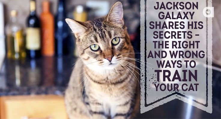 Jackson Galaxy Shares His Secrets - The Right And Wrong Ways To Train Your Cat