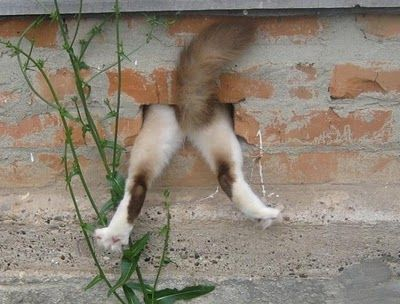 Help!!!!!: Funny Animals, Pink Floyd, Funny Cats, Funny Stuff, Humor, Things, Kitty, Wall