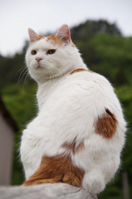 三毛猫さん?