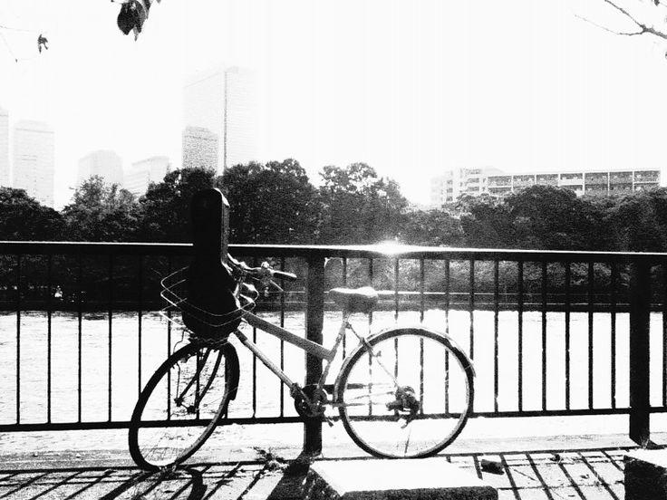 デジタルハリネズミで撮影 20161016-5|大阪の印刷会社経営者 滝野賢治 社長のお仕事