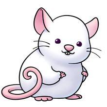 A cute rat