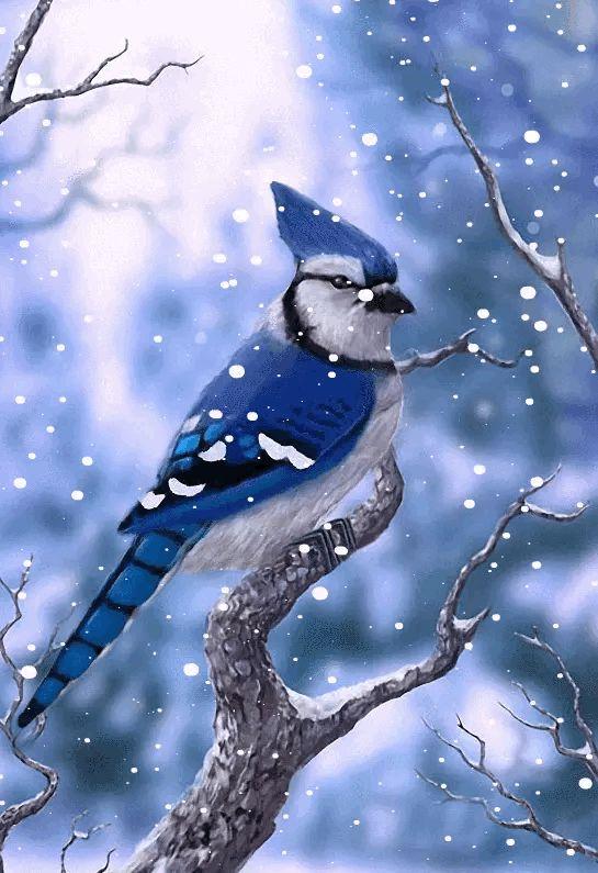 Зимующие птицы анимационные картинки, надписями бросила