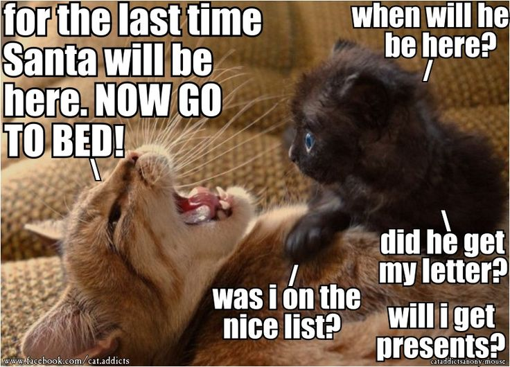 Funny Christmas Memes For Friends : 236 best wall photos images on pinterest kitty cats cat stuff and