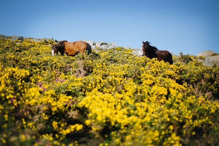La zona de la ría de Arousa es una de las partes más ricas en fauna y flora del mundo. Naturaleza en estado puro. ¡Respira hondo! #Galicia #turismo