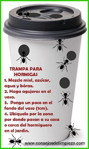 17 mejores ideas sobre repelente de hormigas en pinterest - Plaga de hormigas en mi casa ...