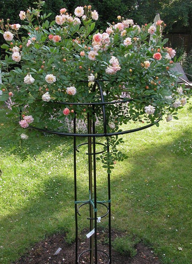 352 best images about garden decor on pinterest gardens. Black Bedroom Furniture Sets. Home Design Ideas