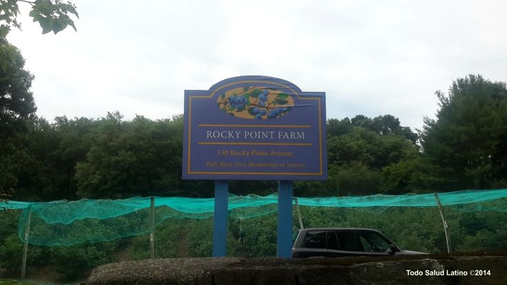 Rocky Point Blueberry Farm, Warwick RI 2014