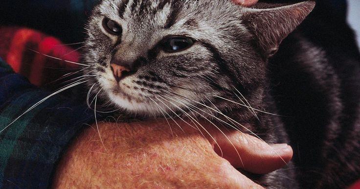 Cómo enseñar a un gato adulto a utilizar la caja de arena. En realidad no hay algo tal como entrenar a un gato en el uso de la caja de arena en el mismo sentido en el que entrenas a un perro a hacer lo quieres que haga. Casi siempre, en el momento en que recibes a un gato nuevo en tu hogar, ya debe haber aprendido a usar el arenero viendo a su madre. Si tienes un gato que nunca ha utilizado una caja de ...
