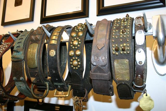 Antique dog collar collection