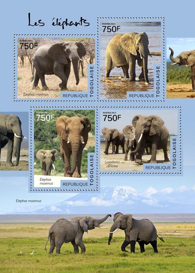 TG 14512 aElephants (Elephas maximus, Loxodonta africana)