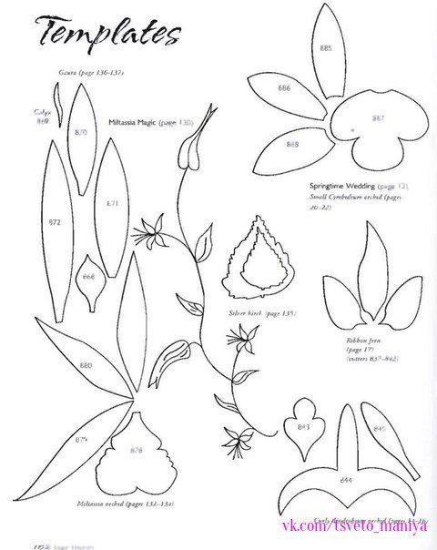 шаблоны орхидей