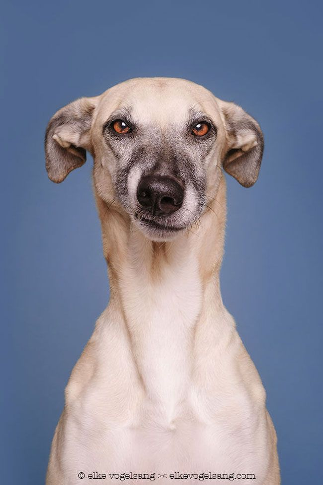 Intimate Portraits Reveal Amusing Facial Expressions Of Skeptical Dogs