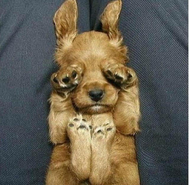 Puppy aw<3