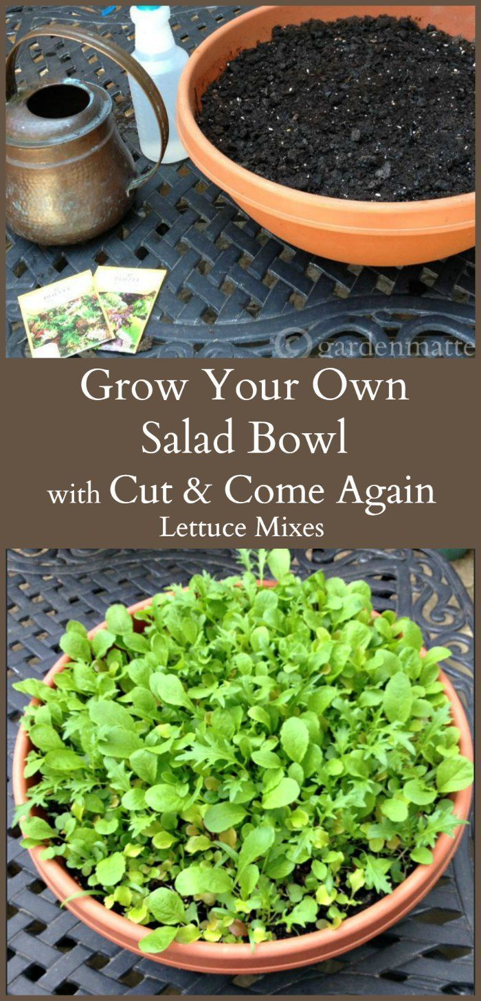 Grow a huge bowl of salad greens that you can cut today and the lettuce will continue to grow, so you can cut it again and again.
